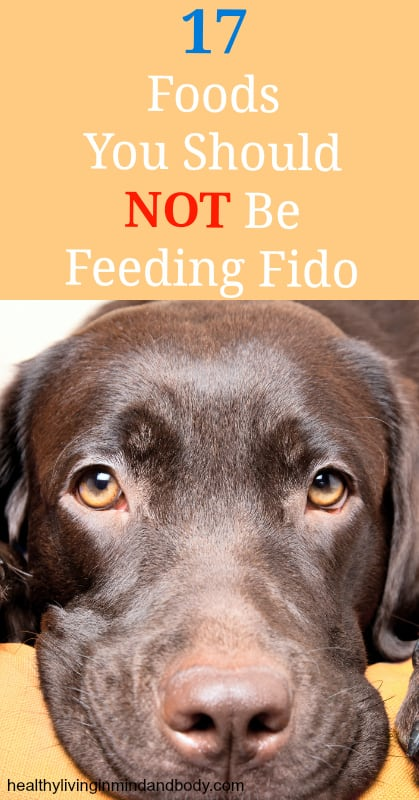 17 Human Foods that Are Toxic to Dogs