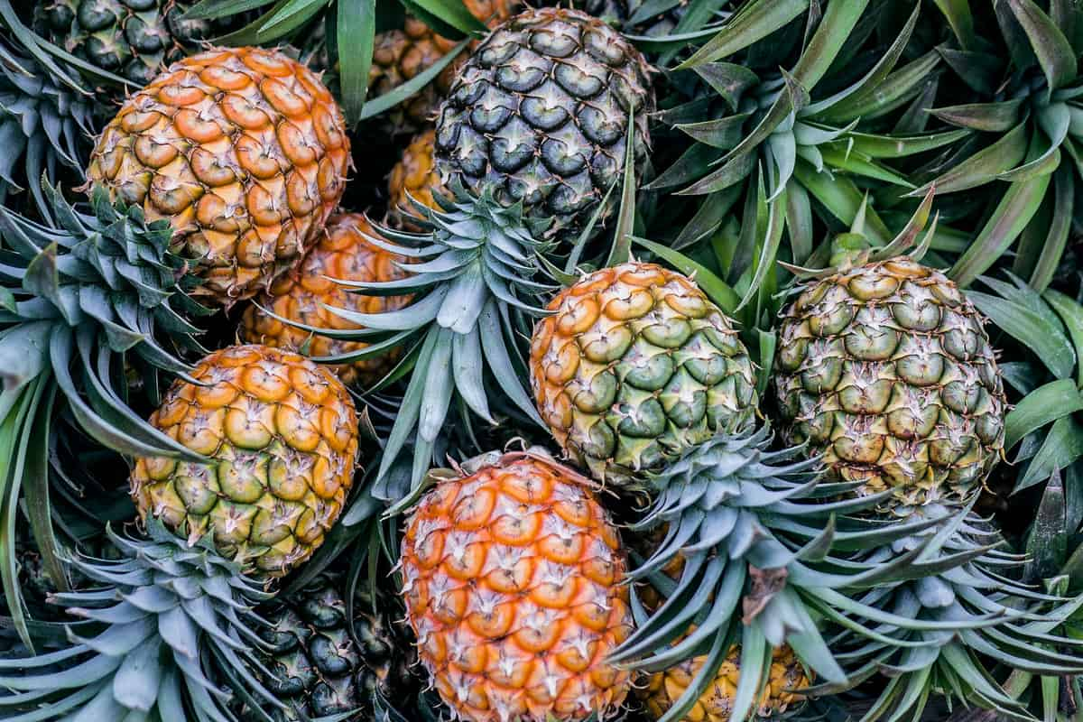 Overhead shot of pineapples piled on top of each other.