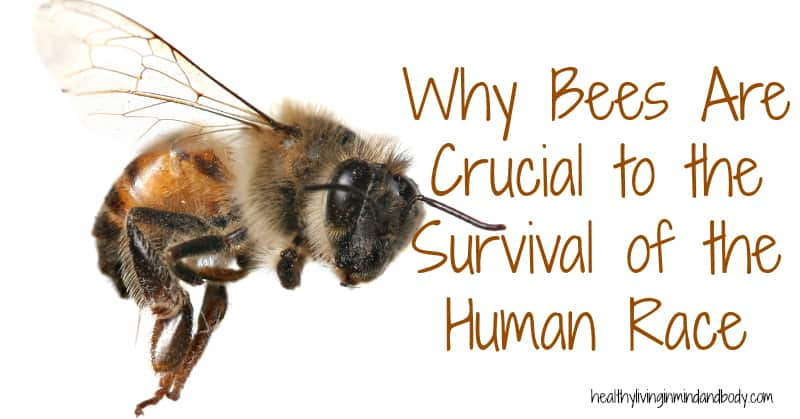 Why Bees Are Crucial to the Survival of the Human Race