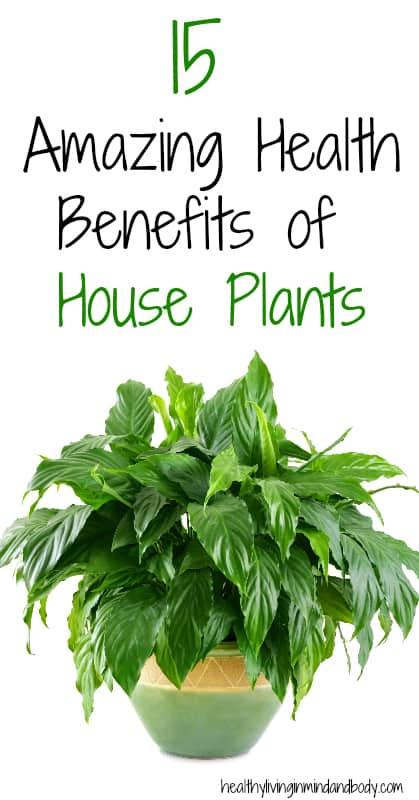 15 Amazing Health Benefits of House Plants