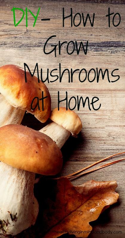 DIY - How to Grow Mushrooms at Home