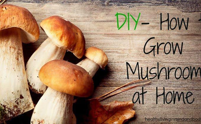 DIY – How to Grow Mushrooms at Home