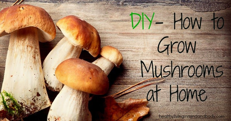 DIY - How to Grow Mushrooms at Home