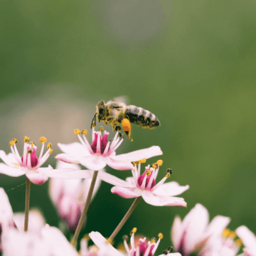 Why Bees Are Crucial to the Survival of the Human Race | Kyndra Holley