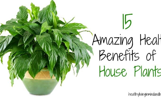 15 Amazing Health Benefits of House Plants
