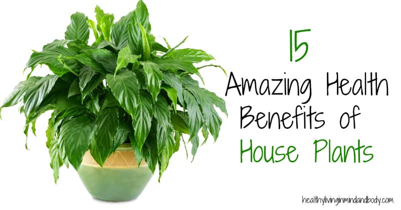 15 Amazing Health Benefits Of House Plants Healthy