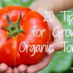 20 Tips for Growing Organic Tomatoes