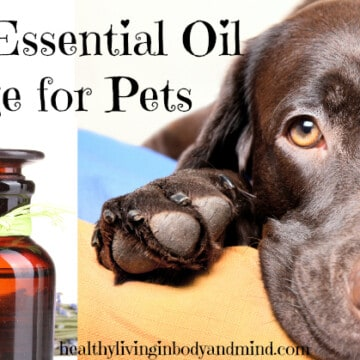 Safe Essential Oil Usage for Pets