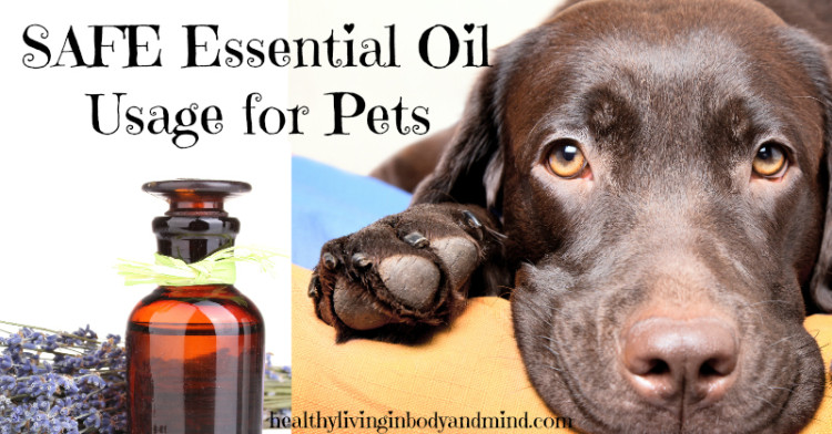 Safe Essential Oil Usage For Pets Healthy Living In Body