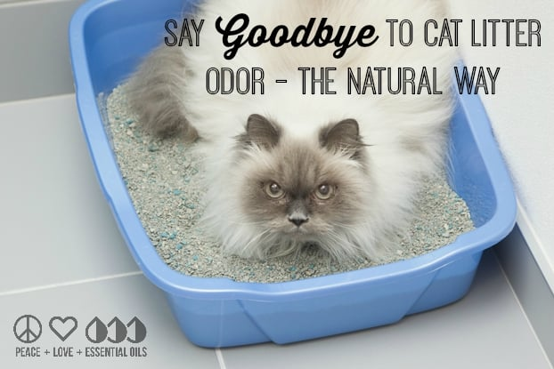 Say Goodbye to Cat Litter Odor the Natural Way