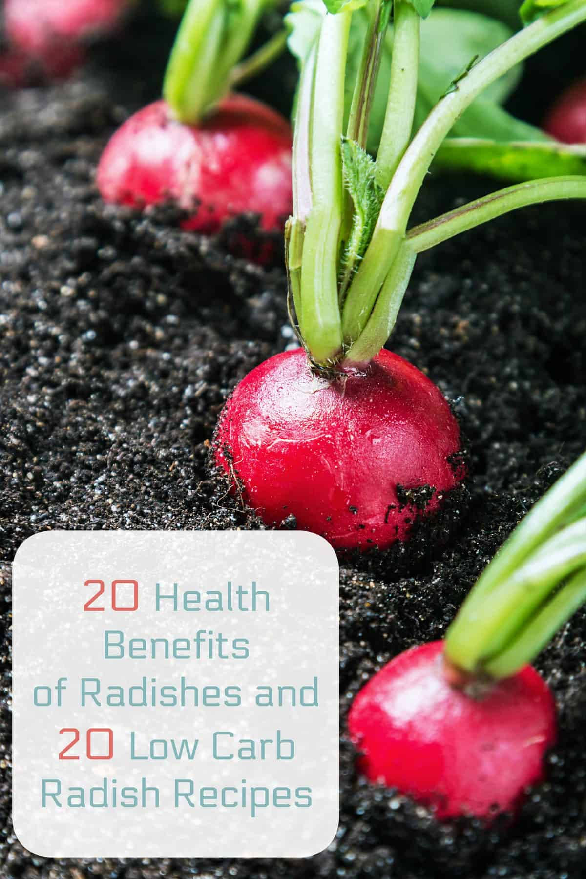 20 Health Benefits of Radishes and 20 Low Carb Radish Recipes | Healthy Living in Body and Mind